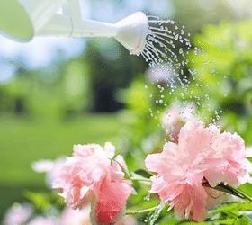 Comment bien jardiner