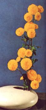 bouquet de tagetes
