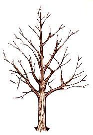 emondage d'un arbre