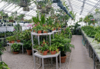 avantages jardinage d'intérieur
