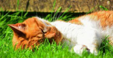 Chaton couché dans l'herbe