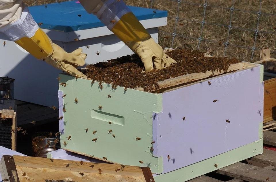 Cadres dans une ruche