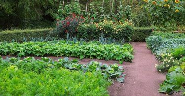 Jardin potager en pleine saison
