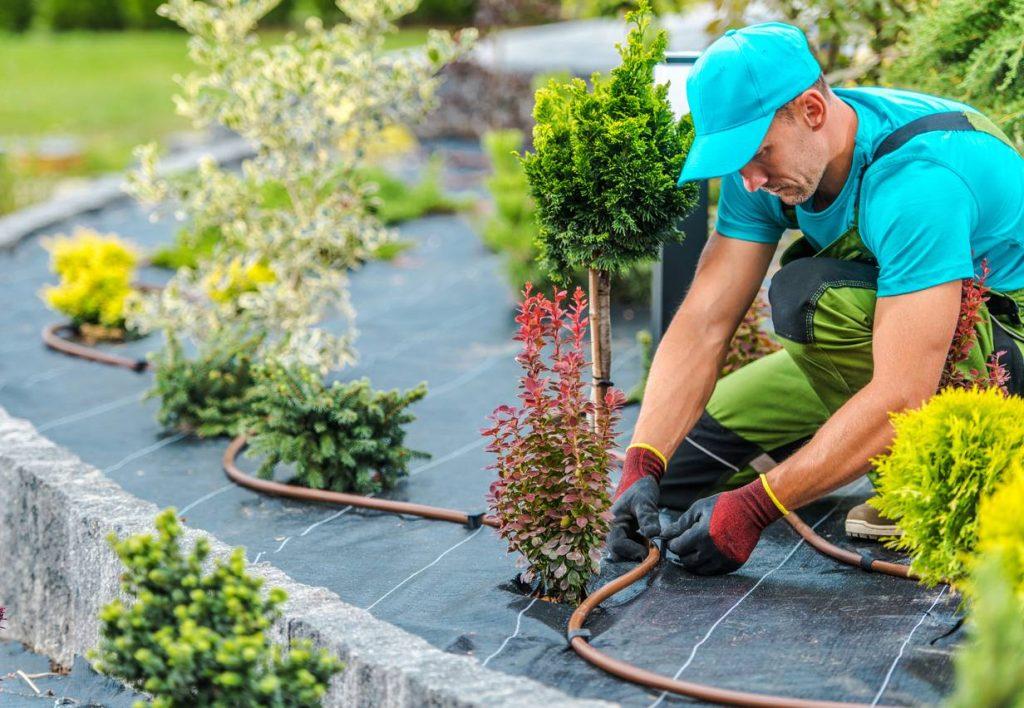 Pose d'irrigation automatique par un paysagiste