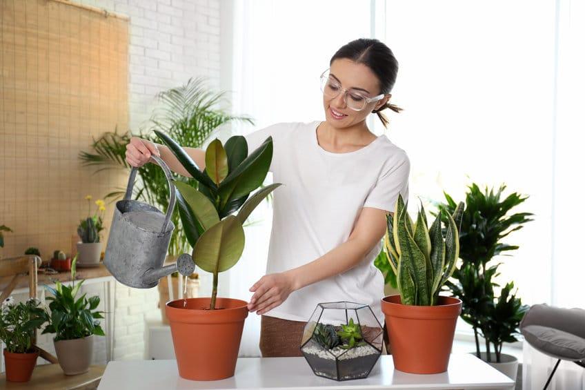 Jardin d'intérieur, Arrosage des plantes